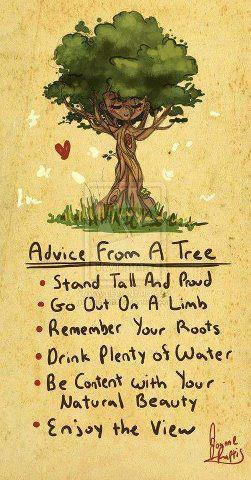 Wisdom Taught By Example Of A Tree   Amy Rees Anderson's Blog