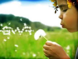 wish flower 2